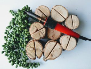 rondins de bois de bouleau