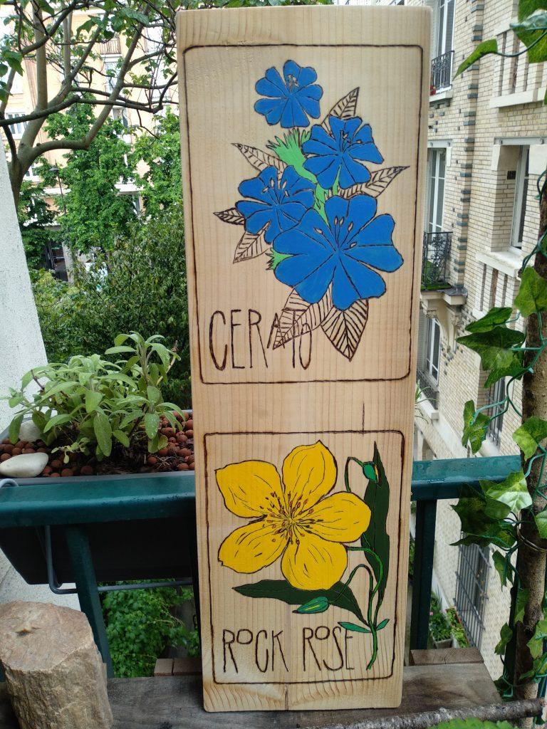 peinture pyrogravure fleurs de bach